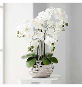 Orquídeas Conjunto
